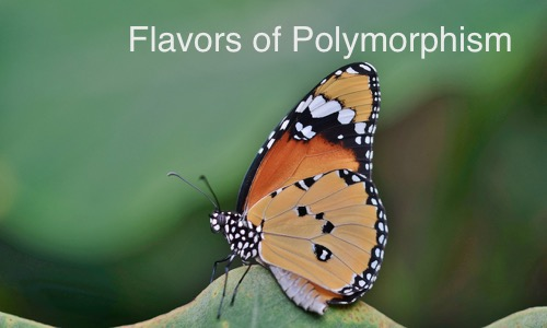 Flavors of polymorphism